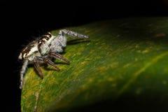 Pająk na drzewnym liścia tle, makro- pająk w naturze zdjęcie royalty free
