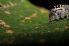 Pająk na drzewnym liścia tle, pająk w naturze obrazy royalty free