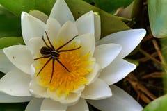 Pająk na kwiacie obrazy royalty free