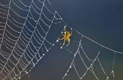 Pająk na pająk sieci Zdjęcia Royalty Free
