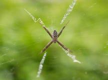 Pająk na pająk sieci z natury zieleni tłem Zdjęcia Stock