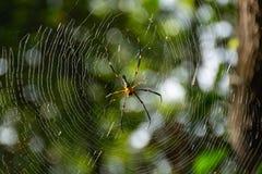 Pająk na pajęczynie w ogródzie Obrazy Royalty Free