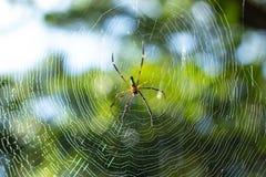 Pająk na pajęczynie w ogródzie Fotografia Royalty Free