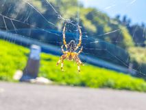 Pająk na spider& x27; s sieć z krajobrazowym i drogowym tłem obraz stock