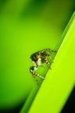 Pająk na zielonym liściu Zdjęcia Royalty Free