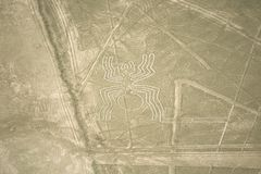 Pająk, Nazca linie, Peru fotografia royalty free