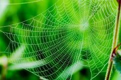 Pająk pajęczyna z wodą lub sieć opuszczamy po deszczu Obrazy Stock