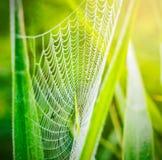 Pająk pajęczyna z wodą lub sieć opuszczamy po deszczu Fotografia Stock
