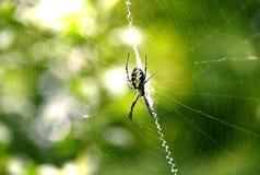 pająk piśmie sieci Zdjęcia Royalty Free