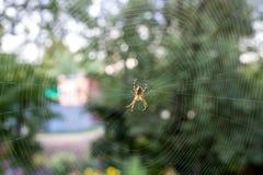 pająk przędąc sieć zdjęcia stock