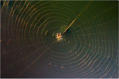 pająk przędąc sieć Obrazy Stock