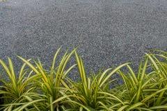 Pająk roślina Fotografia Stock