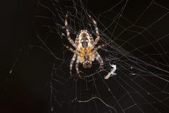 Pająk robi pajęczynie obrazy stock