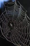pająk sieć Zdjęcie Stock