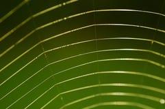 pająk sieć Fotografia Royalty Free