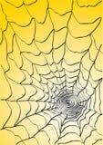 pająk sieć Fotografia Stock