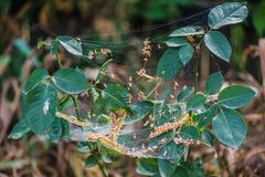 Pająk sieć błękitny miękka pająka odcienia sieć obrazy stock