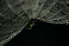 Pająk sieć i pająk Zdjęcia Royalty Free