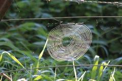 Pająk sieć na Drucianym ogrodzeniu zdjęcia royalty free