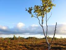 Pająk sieć na gałąź w wschodzie słońca, Lithuania obrazy stock