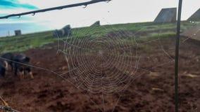 Pająk sieć na rolnym ogrodzeniu fotografia royalty free