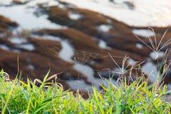 Pająk sieć na trawie z Brzegowym tłem fotografia royalty free