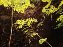 Pająk sieć przez zielonego liść zdjęcia royalty free