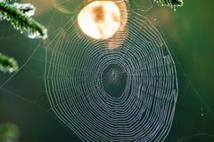 Pająk sieć przy wschodem słońca fotografia stock