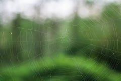 Pająk sieć w dżungli obrazy stock