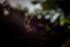 pająk sieć w drewnie Fotografia Royalty Free