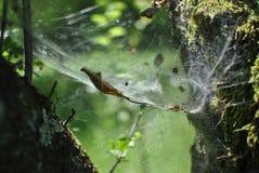 Pająk sieć w lesie Zdjęcia Royalty Free