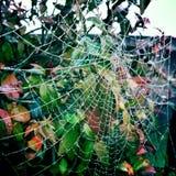Pająk sieć w ogródzie Zdjęcie Stock