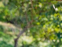 Pająk sieć w zielonej naturze Obrazy Stock