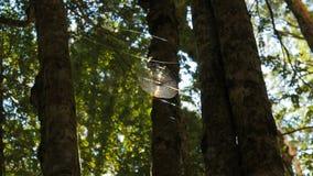 Pająk sieć wysoka w bukowym lesie zaświeca światłem słonecznym zdjęcie wideo