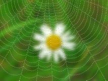 Pająk sieć z kroplami na blured tle. Obrazy Stock
