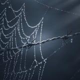 Pająk sieć z kroplami w ogrodzeniu zdjęcie royalty free