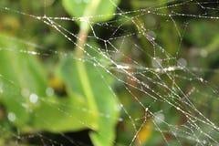 Pająk sieć z małymi kroplami woda Obraz Royalty Free