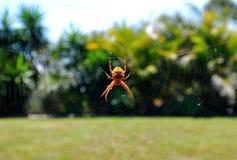 Pająk sieć z pająkiem w centrum obraz stock