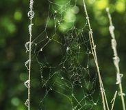 Pająk sieć z zielonym zamazanym tłem zdjęcia royalty free