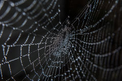 Pająk sieć zakrywająca w rosie Obraz Royalty Free