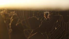 Pająk sieci pajęczyna na zmierzchu insekta insekta stylu życia varicoloured tle pająk tropi natury pojęcie zdjęcie wideo