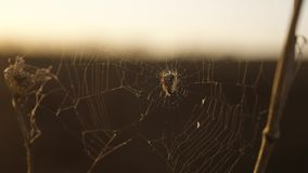 Pająk sieci pajęczyna na zmierzchu insekta insekta tła varicoloured stylu życia pająk tropi natury pojęcie zbiory wideo