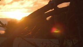 Pająk sieci pajęczyna w drzewie, krzaku backlit zmierzchem/- Dolly strzał zbiory
