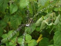 Pająk sieci podpisu pająk zdjęcia stock