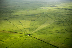 Pająk sieci ryż pole w Ruteng Zdjęcie Stock