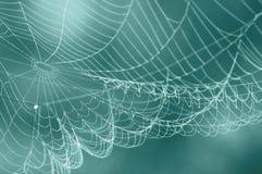 Pająk sieci zamazany tło Obrazy Stock