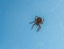 Pająk siedzi na jego pajęczynie zdjęcie royalty free