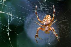 Pająk siedzi na pająk sieci Obraz Royalty Free