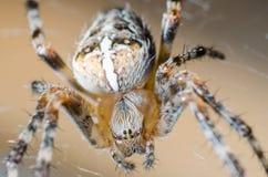 Pająk siedzi na pajęczynie w oczekiwaniu na ofiarę zdjęcie stock