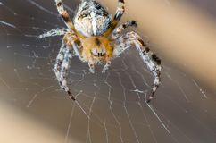 Pająk siedzi na pajęczynie w oczekiwaniu na ofiarę zdjęcia stock